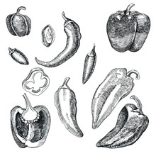 Set Of Different Peppers. Pieces Of Pepper And Whole Fruit. Graphics. Hand Drawn