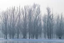 Frozen Lake In Forest. Winter ...