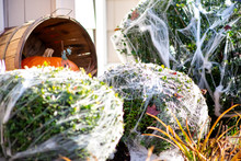 A View Of Halloween Decoration...