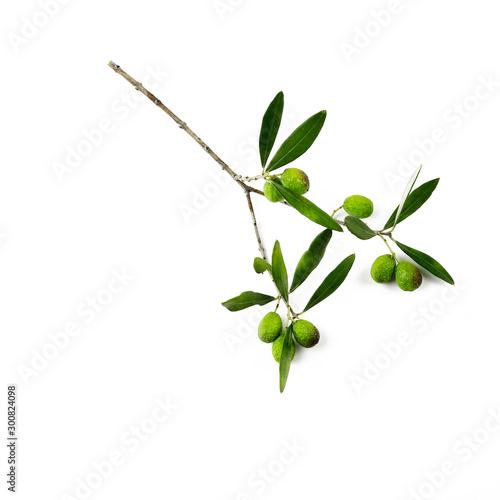 Foglie fresche delle olive verdi isolate su fondo bianco Fototapeta