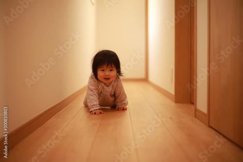 Fotografia  ハイハイする赤ちゃん