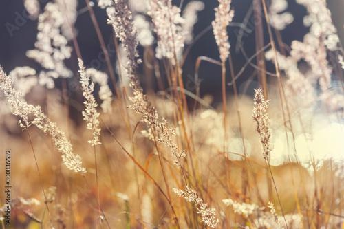 Montage in der Fensternische Herbst Autumn meadow