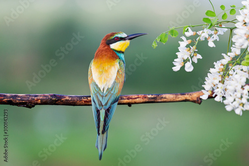 beautiful exotic bird sitting on a branch