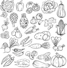 Set Of The Different Vegetable...