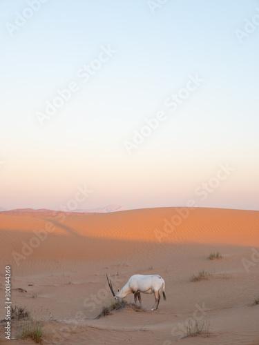 Oryx at Sunset Wallpaper Mural