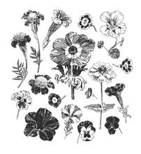 Botanical Graphics, Collection...