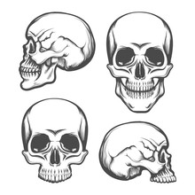Human Skull Front And Side Vie...