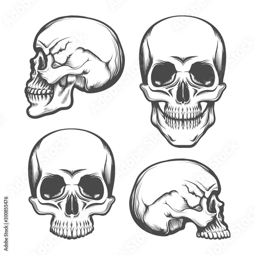 Pinturas sobre lienzo  Human Skull Front and Side View Set