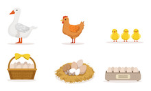 Poultry Farm With Goose, Hen, Three Little Baby Birds And Different Eggs Vector Illustration Set Isolated On White Background