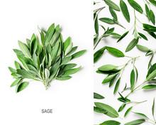 Fresh Sage Leaves Layout