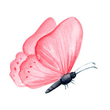 Watercolor Pink Butterfly On An Isolated White Background, Illustration