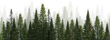 Dark Green Straight Trees Fore...
