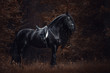 portrait of stunning elegant sport dressage friesian stallion horse with long mane and tail standing on ground in forest in autumn landscape