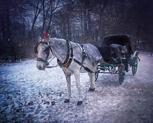 December Snowstorm At Englischer Garten In Munich, Horse-drawn Carriage Waiting For Tourists