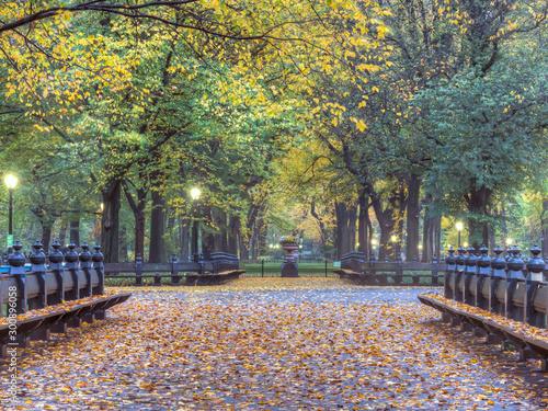 Fototapety, obrazy: Central Park the Mall