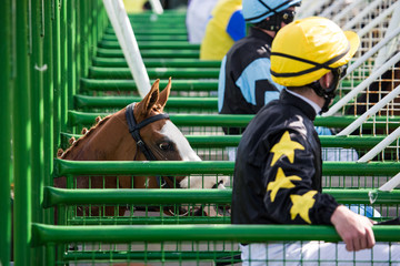 Close up view of race horse entering starting gate, horse racing action