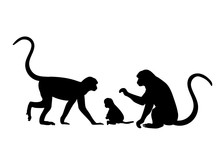 Monkey Family. Silhouettes Of ...