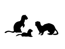 Ferrets Family. Silhouettes Of...