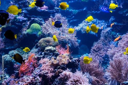 Foto op Plexiglas Koraalriffen underwater coral reef landscape with colorful fish and marine life