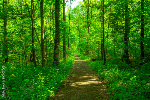 forest trees. nature green wood - 300905062
