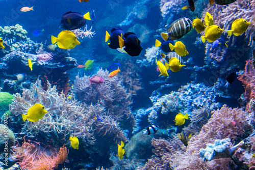 beautiful-underwater-world-with-tropical-fish