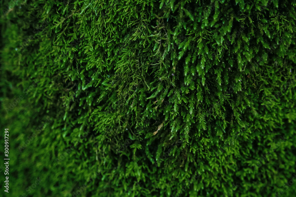 Fototapety, obrazy: Dark green moss textured background with bokeh