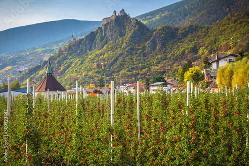 Photo  Farm of apple trees under the beautiful Saben Abbey in South Tyrol, Italy
