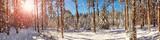 Fototapeta Fototapety na ścianę - Pine trees covered with snow