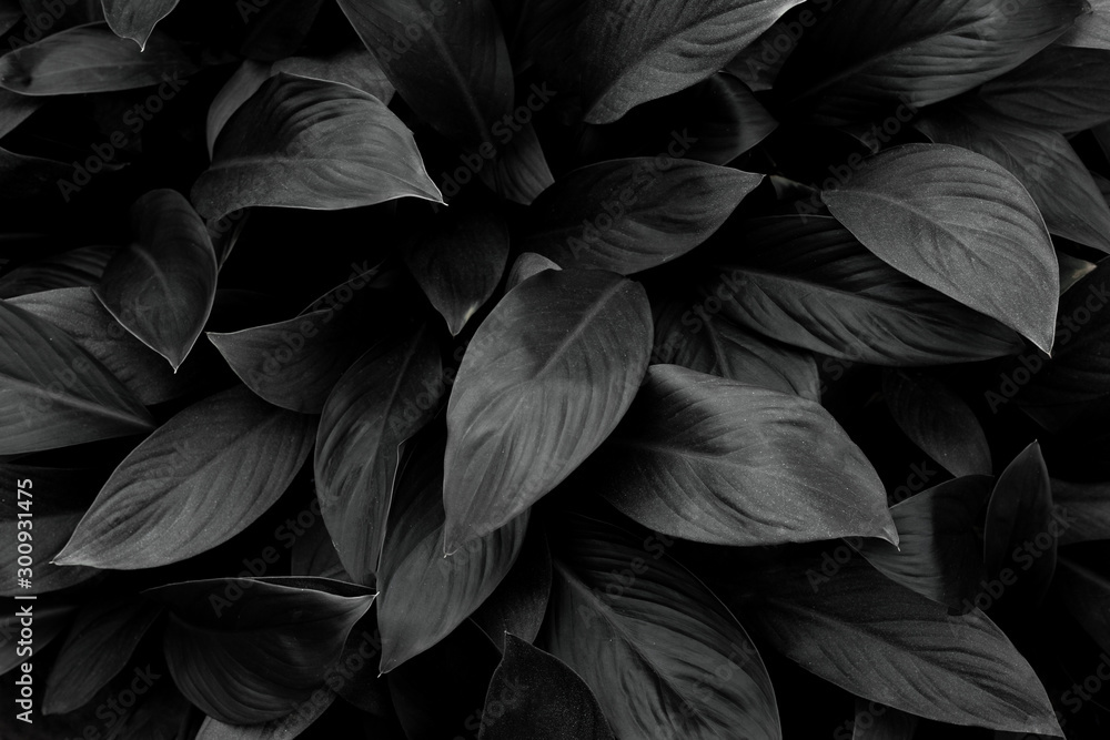 Fototapety, obrazy: monochrome leaves nature  background, closeup leaves texture, tropical leaves
