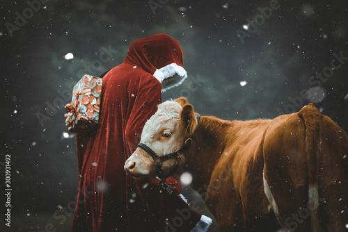 Photo Stands Cow Weihnachtsmann und Ochse im Schnee