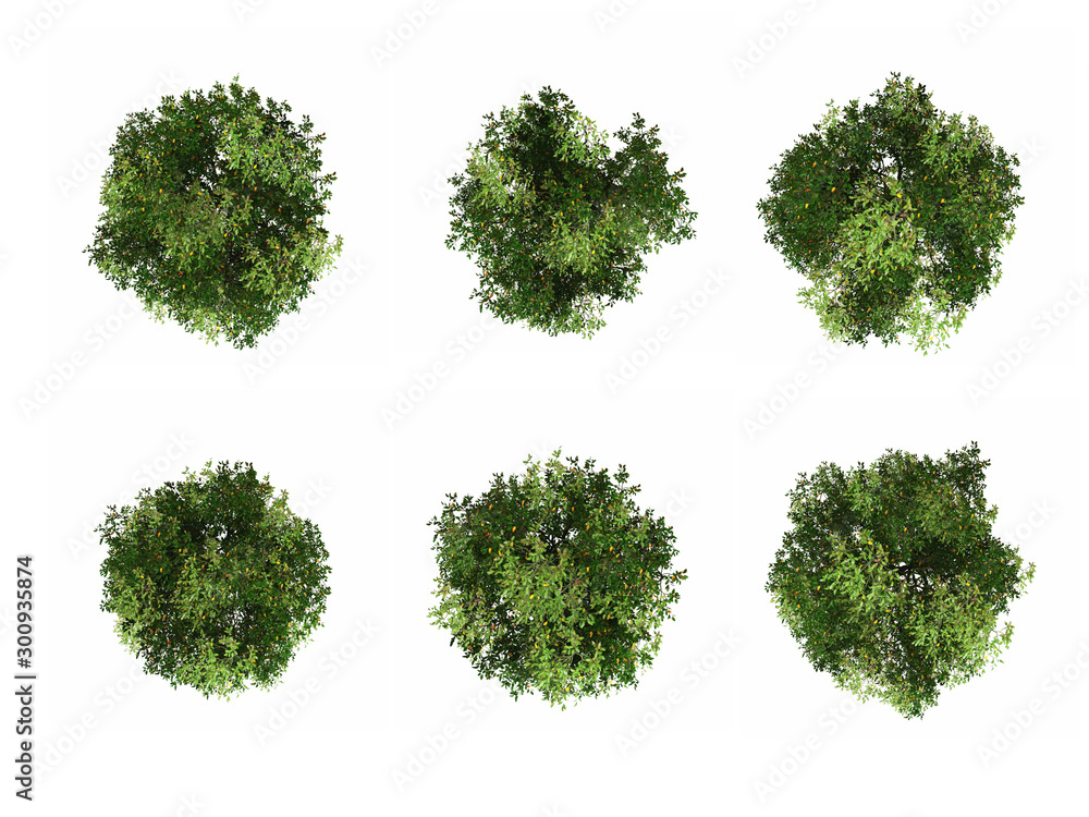 Fototapety, obrazy: tree top view on white background