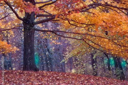 Foto auf Leinwand Aubergine lila Autumn photo edited in a painterly way