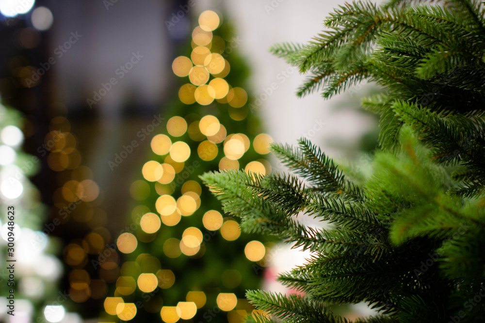 Fototapety, obrazy: Christmas tree. Blue spruce branches on a textured background. Blue spruce, green spruce, white spruce. Artificial Christmas Tree, Blue Christmas Tree