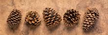 Row Of  Pine Cones Against Bark Paper