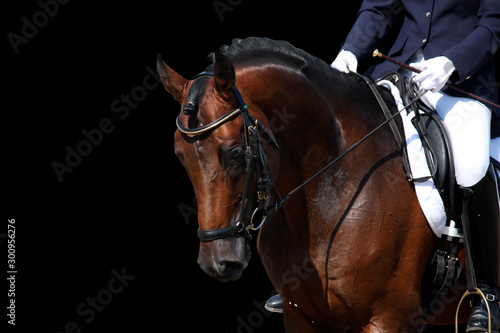 Fototapeta Bay horse portrait during dressage show isolated on black obraz