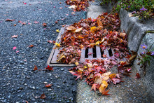 Flooding Threat, Fall Leaves C...