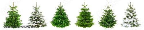 Fotografering Set of 6 studio shots of fresh gorgeous fir trees in lush green for Christmas, w