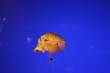 canvas print picture - tropical fish in an aquarium