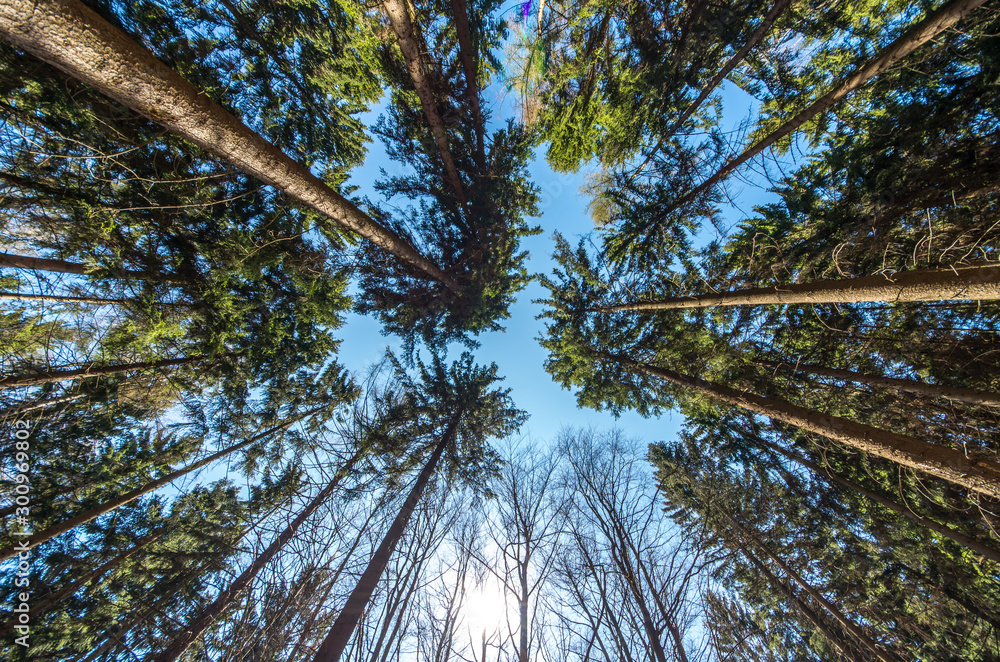 Fototapety, obrazy: the beautiful forest