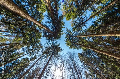 Obraz the beautiful forest - fototapety do salonu