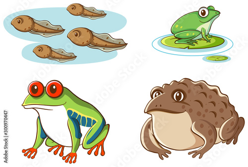 Isolated picture of tadpoles and frogs Canvas-taulu