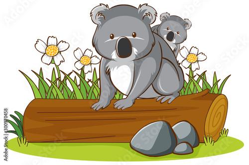 Montage in der Fensternische Kinder Isolated picture of koala on log