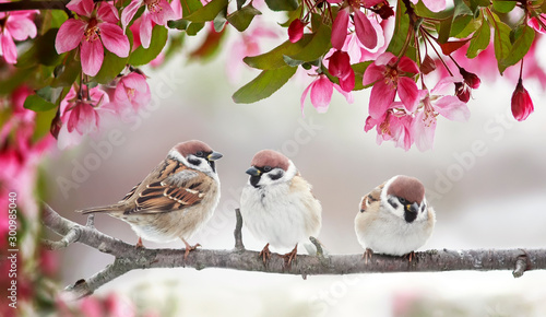 Photo natural beautiful background with three small funny birds sparrows sitting on a