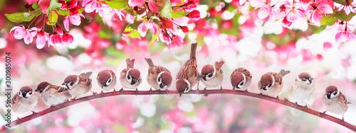 Obrazy kwiat jabłoni   naturalne-tlo-panoramiczne-ze-stadem-wielu-malych-zabawnych-ptakow-wrobli-siedzacych-na-galezi