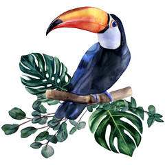Naklejka Florystyczny Watercolor hand painted colorful realistic illustration of toucan bird with monstera leaves and eucalyptus branches. Bright tropical composition is perfect for invitation for thematic wedding or party
