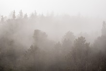 Foggy Scenery Of A Forest On A Gloomy Day