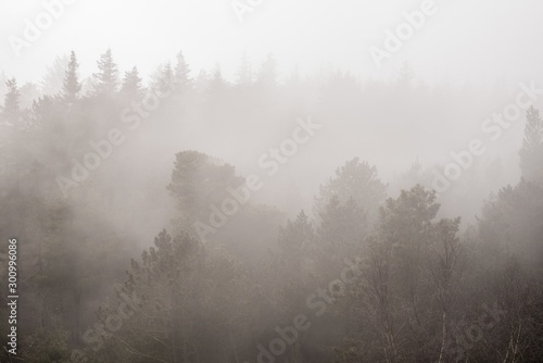 Foggy scenery of a forest on a gloomy day Fototapet