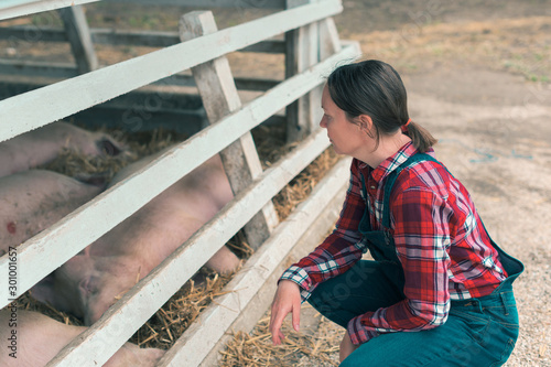 Foto Farmer on pig raising and breeding farm
