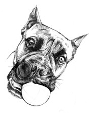 Boxer Dog Head With Ball In Te...