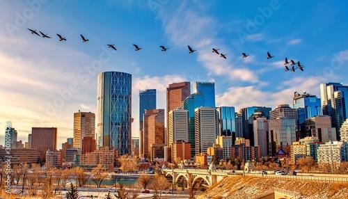 Geese Flying Over Calgary - 301019426